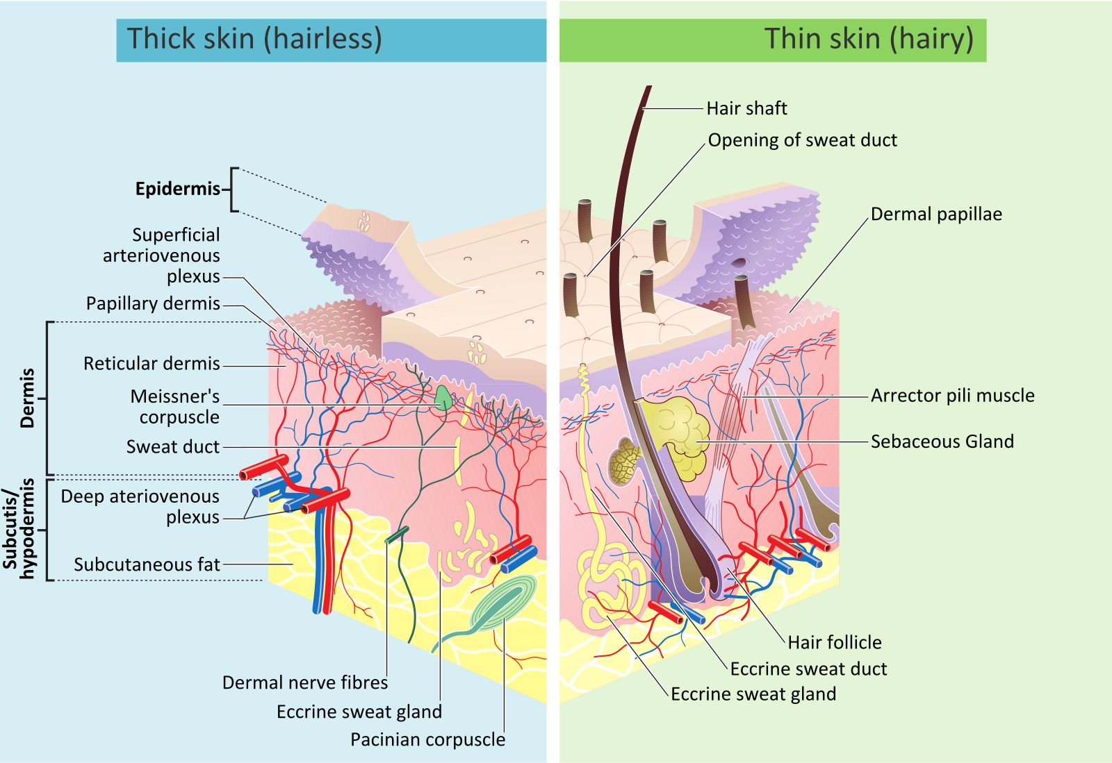 A And P Skin Pinterest Facial Skin Care And Facial