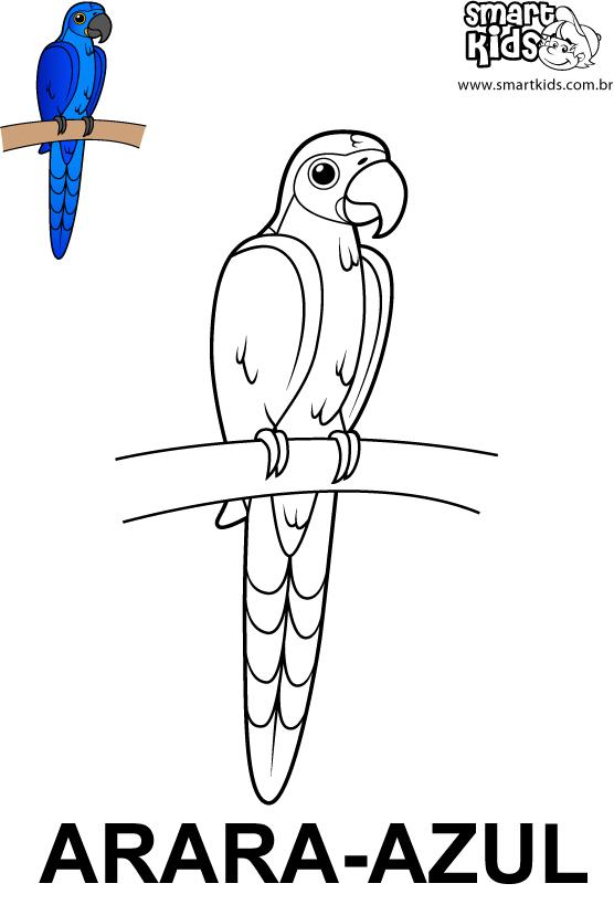 Arara Azul Para Colorir Pesquisa Google Arara Azul Desenho De