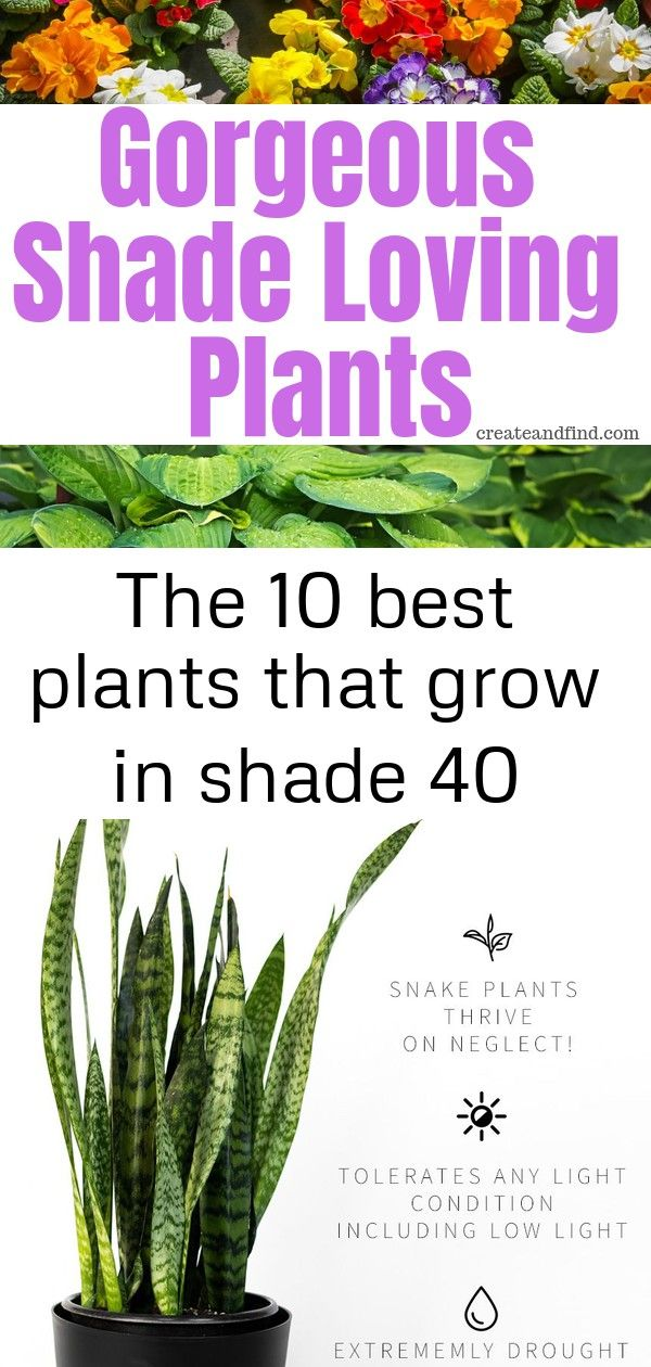The 10 best plants that grow in shade 40 Beautiful annual and perennial plants that love shade Add these shade loving varieties to the yard this year for gorgeous color A...