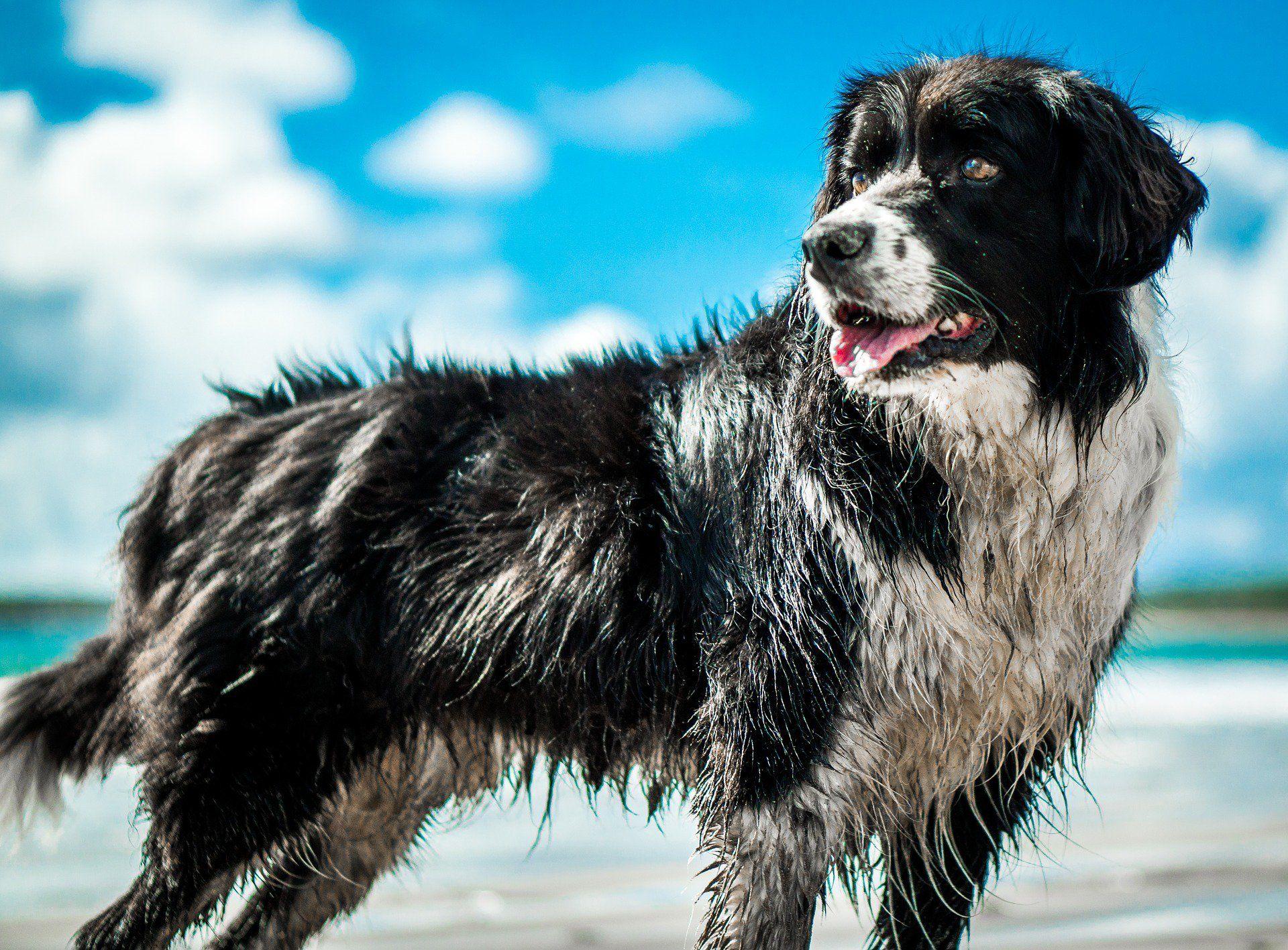 best pet health insurance florida