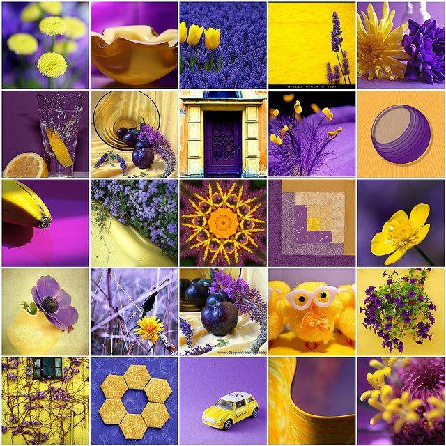 Contrasting Colors Yellow Purple Purple Purple Yellow Contrasting Colors