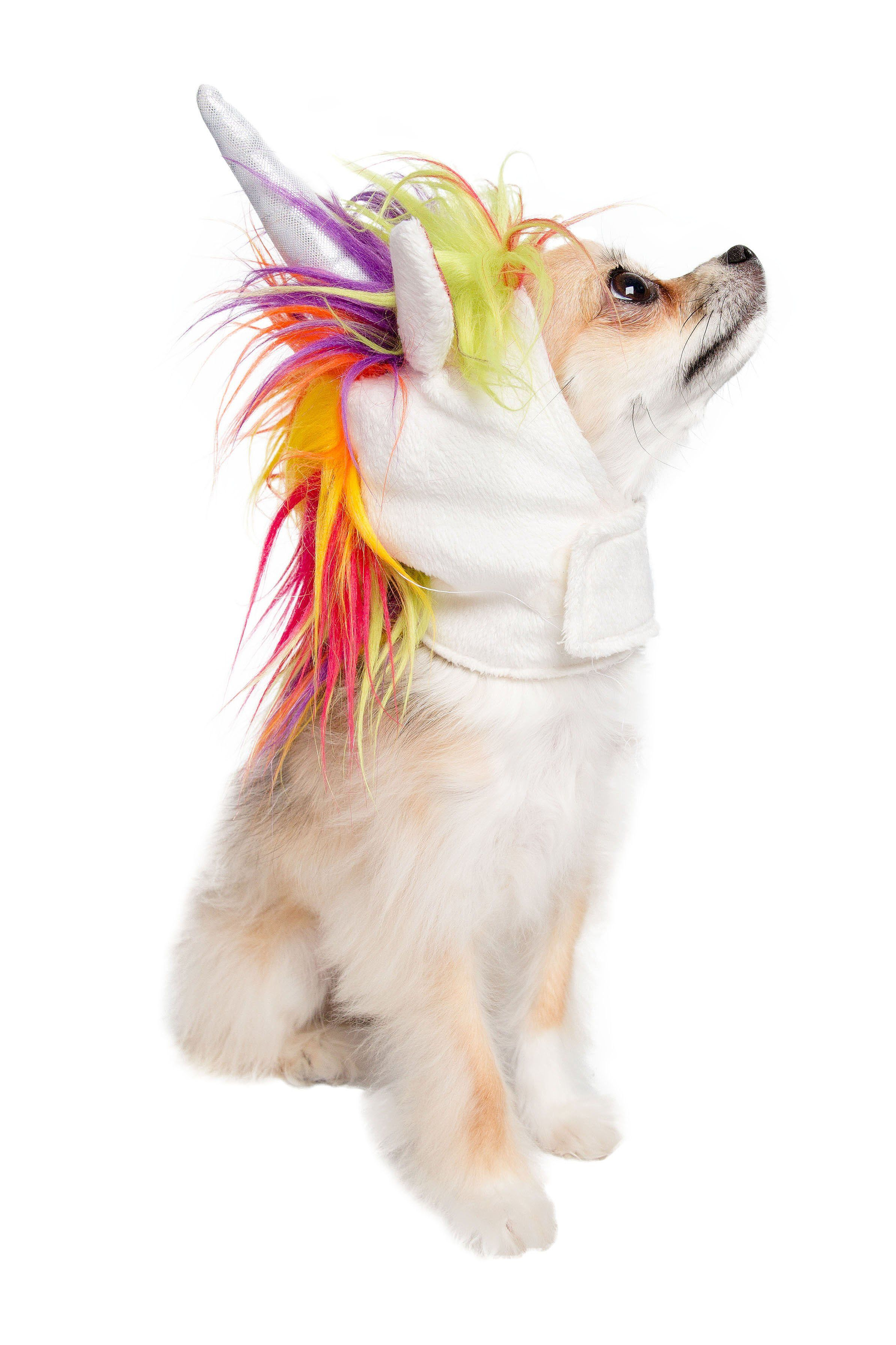 Magical Unicorn Dog Costume Unicorn Dog Costume Diy Dog