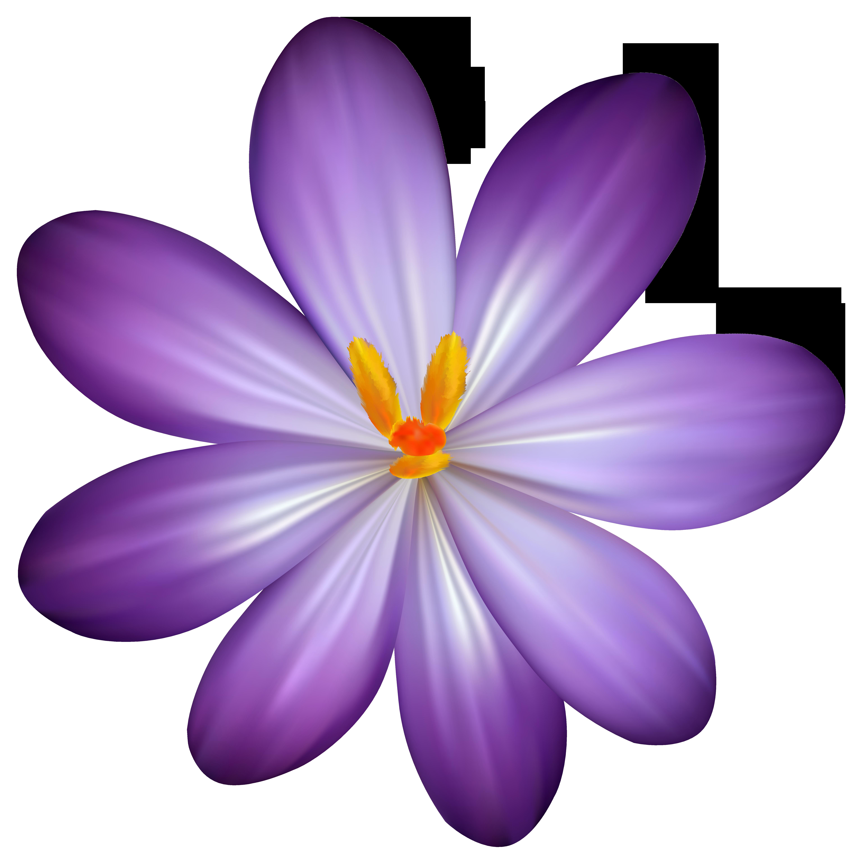 Purple Crocus Flower PNG Clipart Image Digital flowers