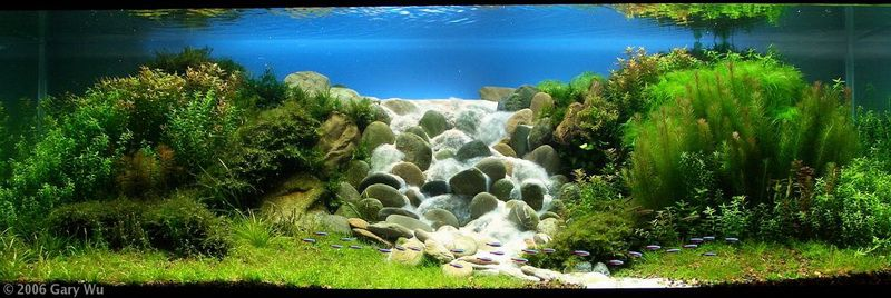 Rocky waterfall (With images)   Aquascape, Aquatic garden ...