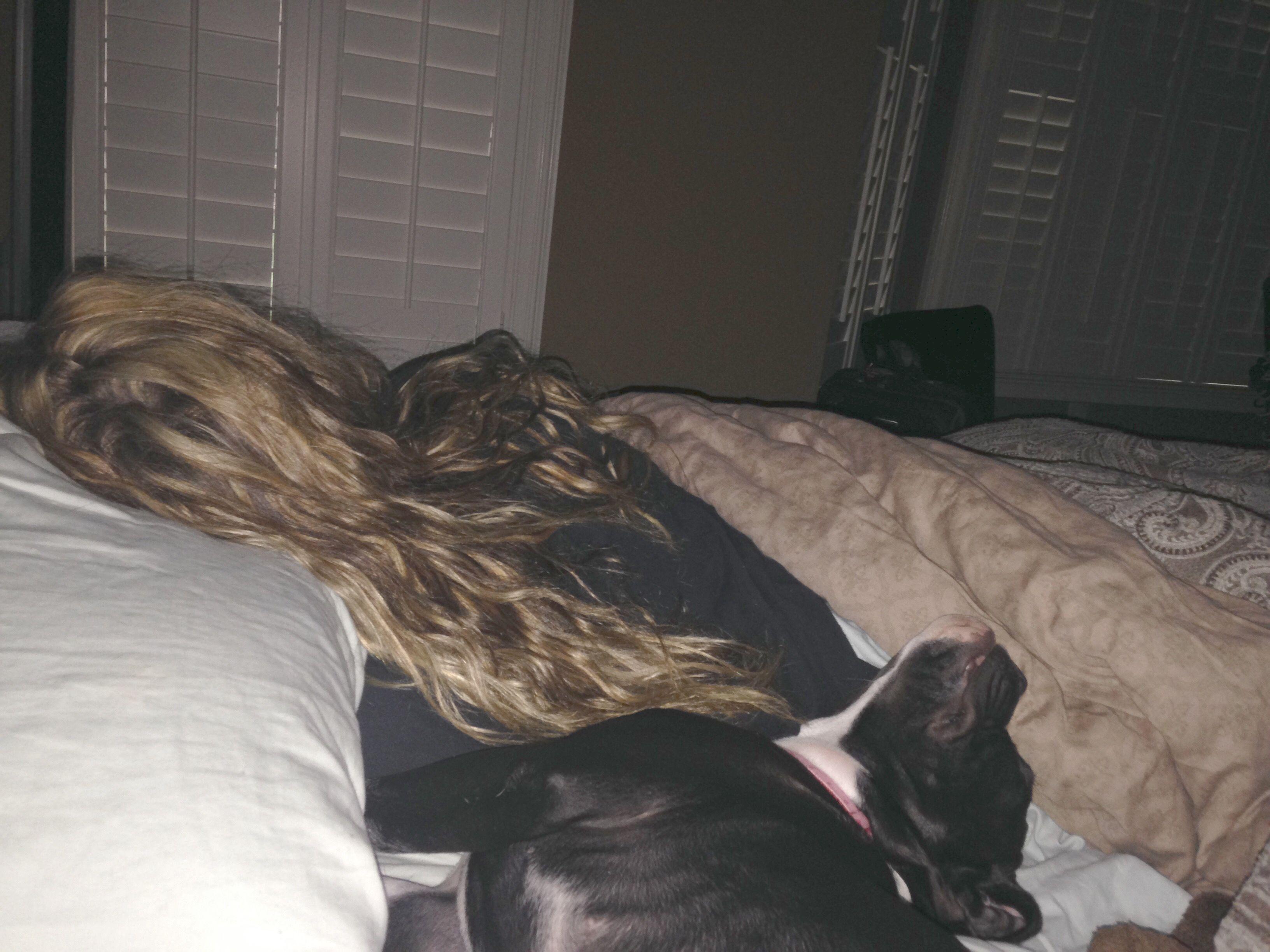 I Let My Dog Sleep In My Bed Sleeping Dogs Dogs Sleep
