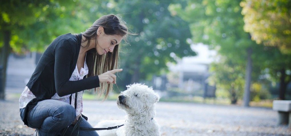 Agressive Dog Education Can Be Corrected With The Right Training