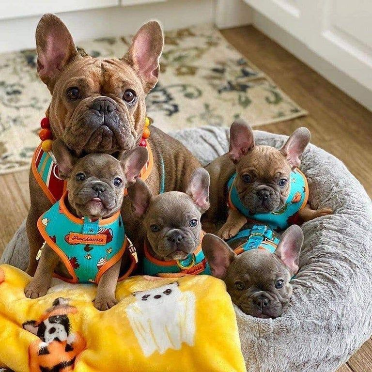 Mrs. RarePupper and her pups.