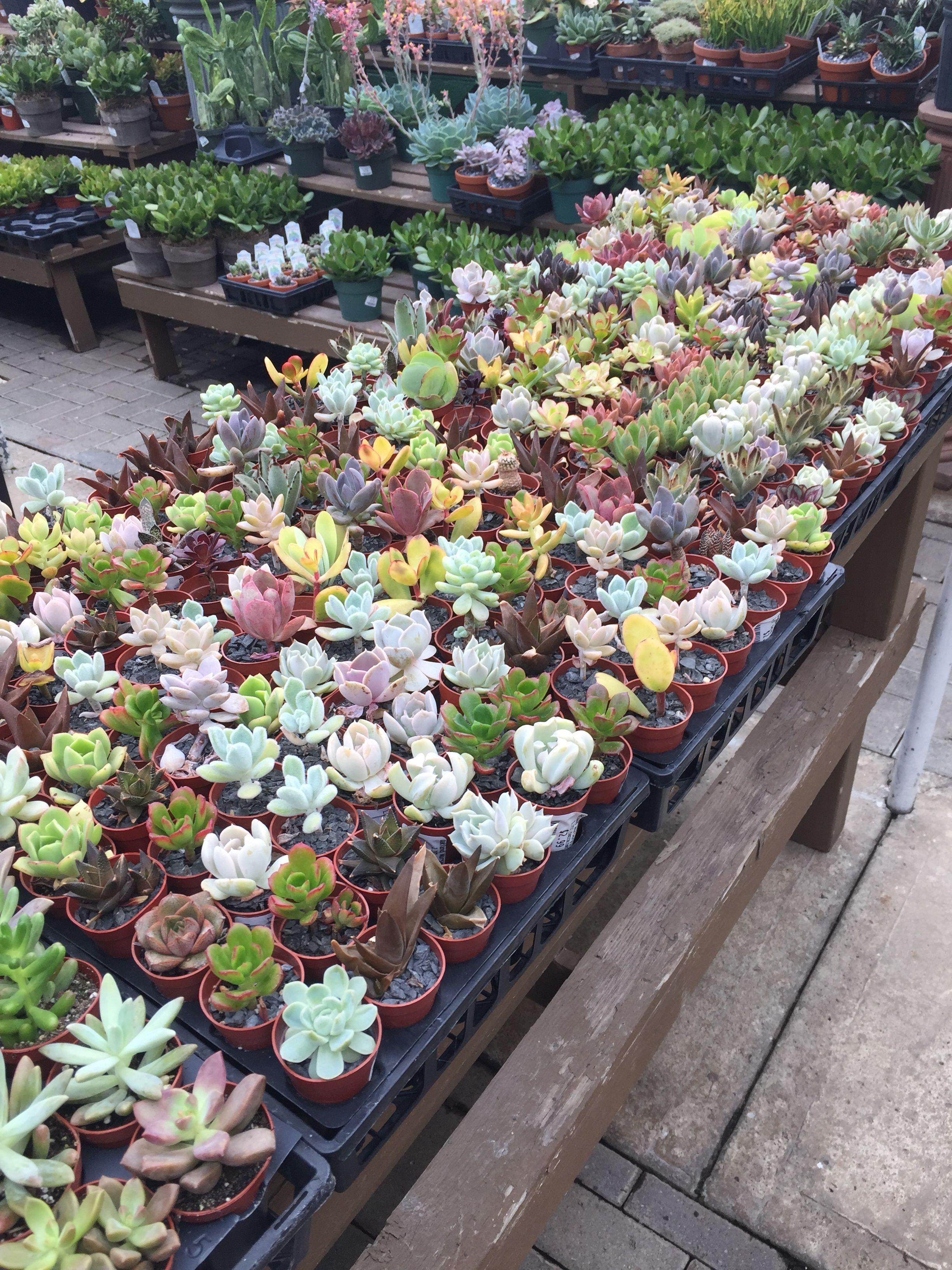 Oakland Nursery In Columbus Ohio Succulents