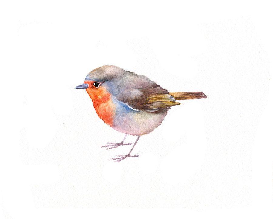 6f9c75d6a0ef7 Darling little bird! Darling little bird! Original Watercolor Painting -  Robin - Bird Artwork Fat ...
