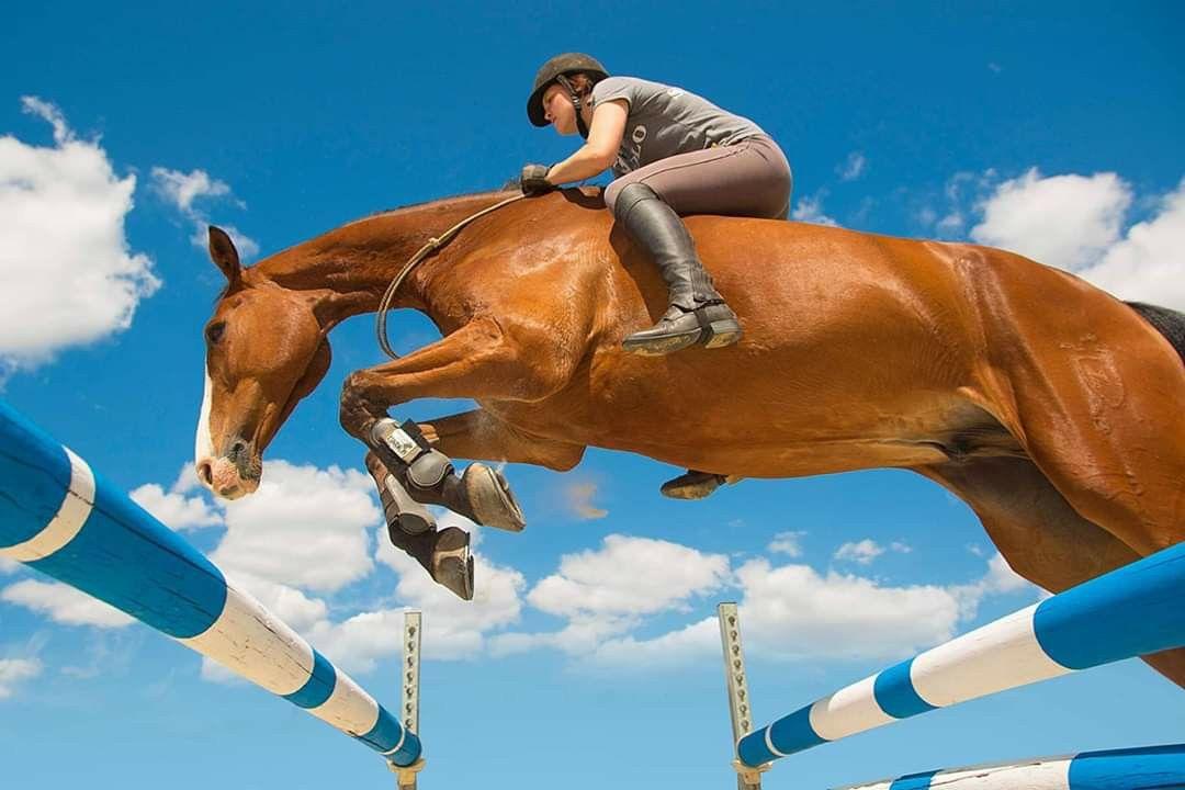 Pin by karen zorn on horse misc in 2020 horses