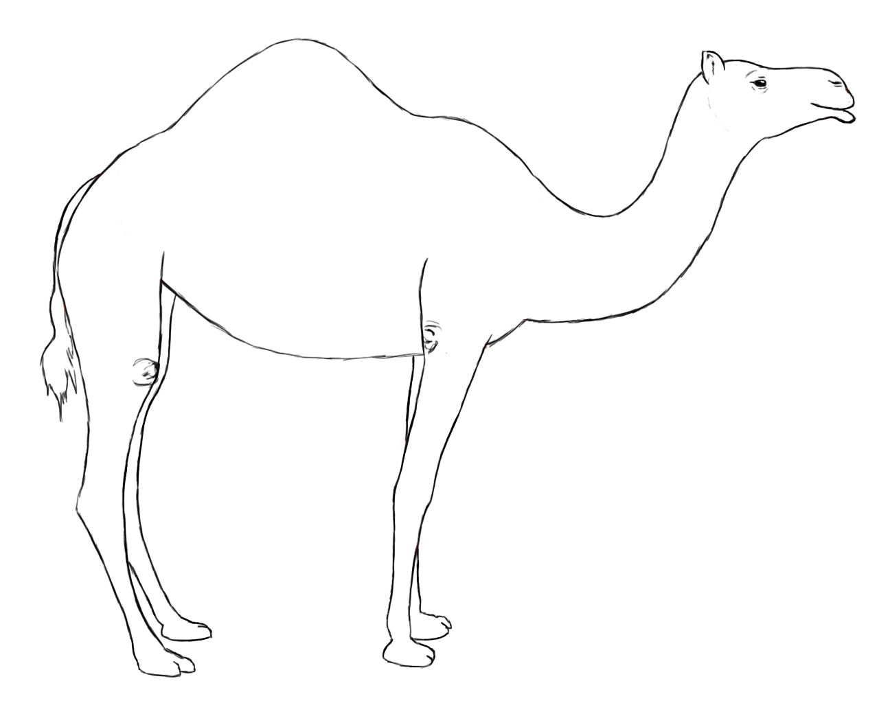 How To Draw A Camel | Pinterest | Zeichnen und Tier