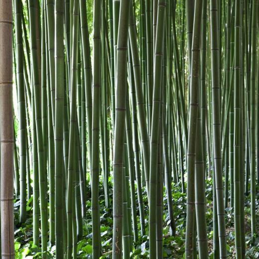 Les am nagements paysagers la bambouseraie d 39 anduze for Amenagement jardin foret