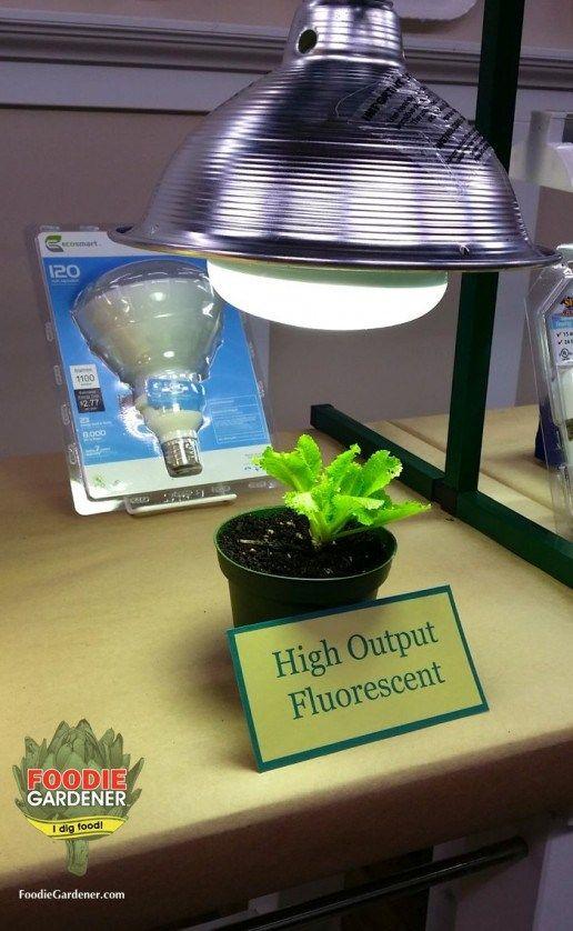 Grow Lights For Beginners Start Plants Indoors Best Led Grow