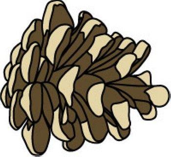 maine pinecone classroom clipart pinecones pinterest rh pinterest dk pine cone border clip art pine cone silhouette clip art