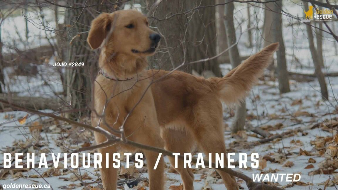 Wanted Behaviourists Trainers Positive Training Assessment