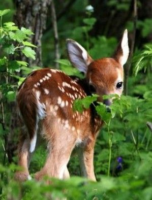 Pin By Rhonda Hamilton On Our Animal Planet Cute Wild Animals Cute Animals Cute Baby Animals