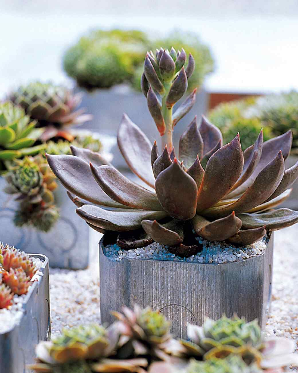Surprising Garden Pots: Electrical Boxes