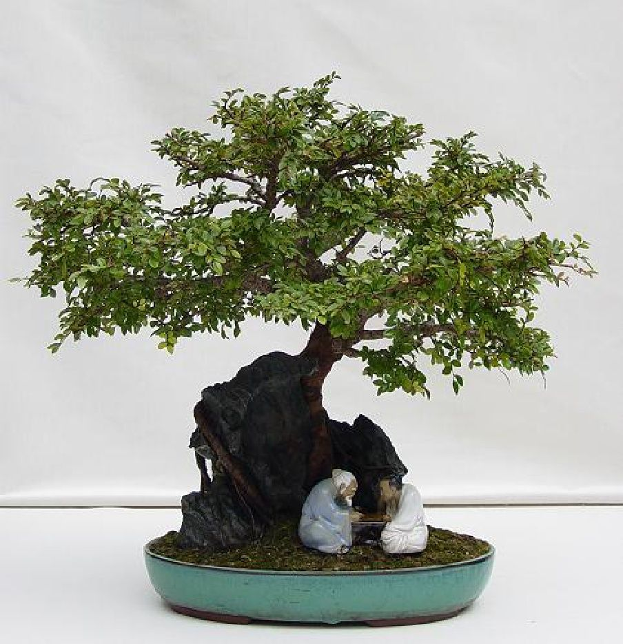 penjim  Bonsai photography | Scribd