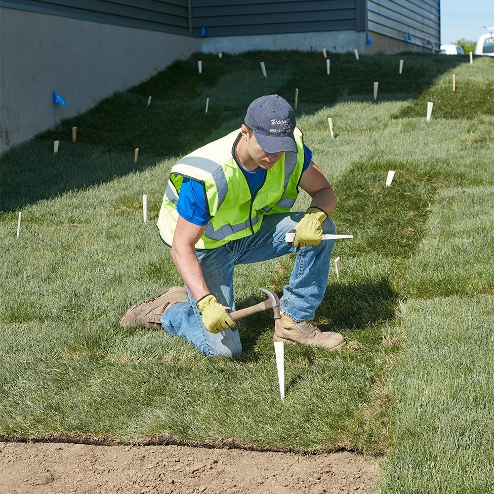 Everything To Know Before Laying Sod How To Lay Sod How To Lay Sod Sod Sod Installation