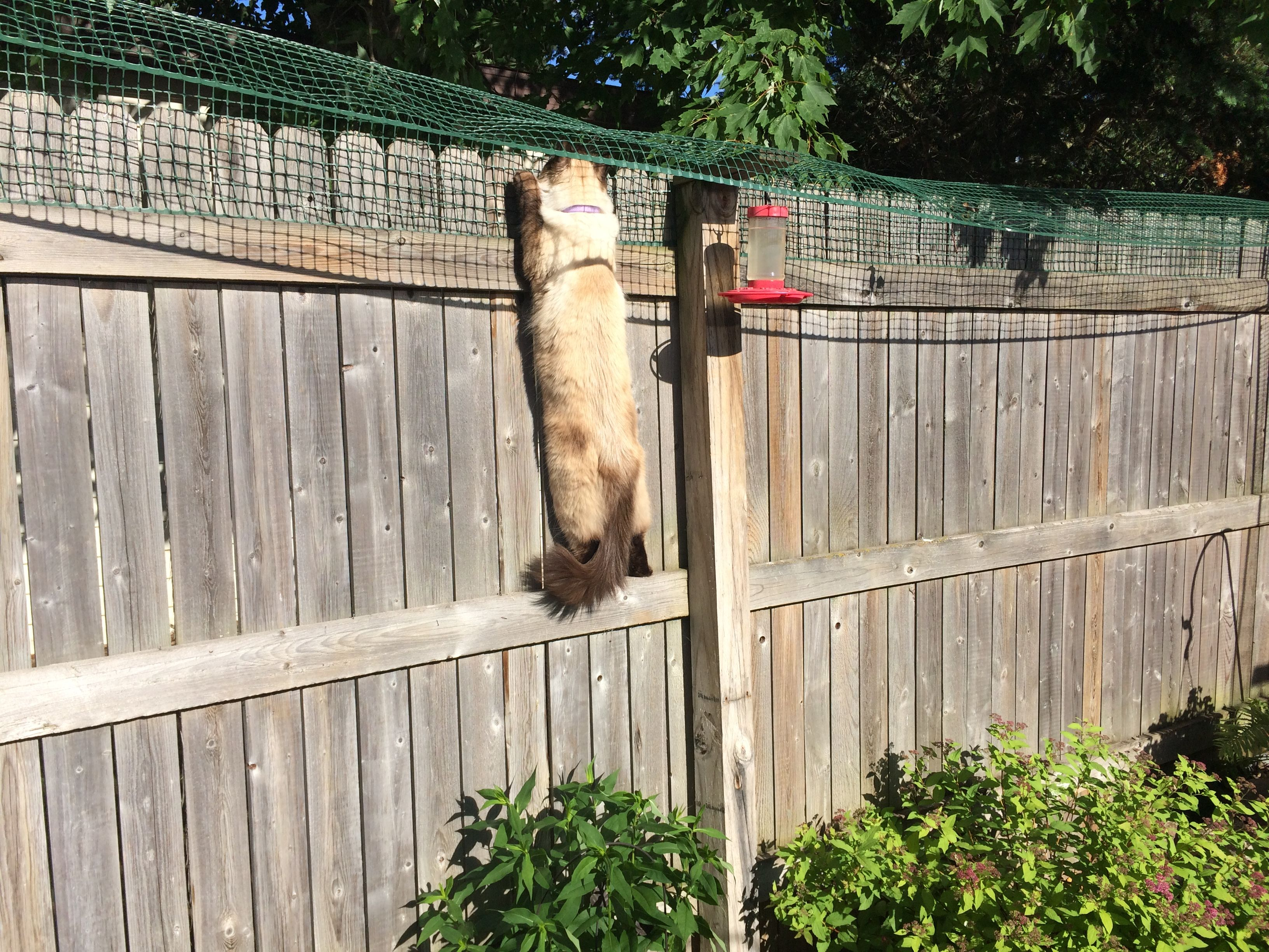 Cat Containment Fence: One Reader Shares How He Contains ...