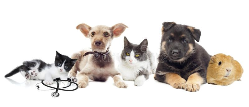 Group Of Pets On A White Background Affiliate Pets Group Background White Ad Kitten Images