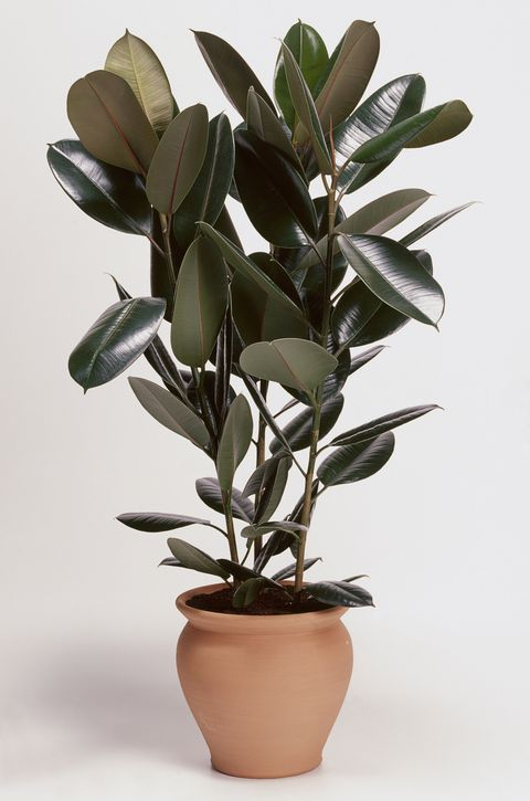 Photo of 15 of the Best Bedroom Plants That Clean the Air, Too