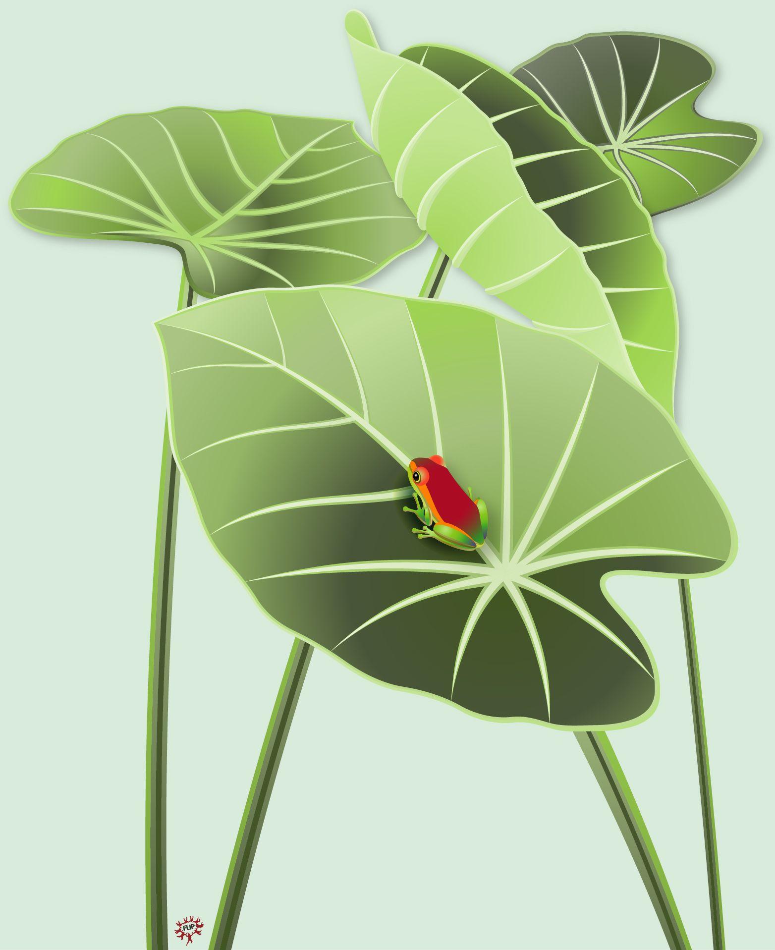 Diseño de rana roja entre hojas verdes. Una de las especies más ...