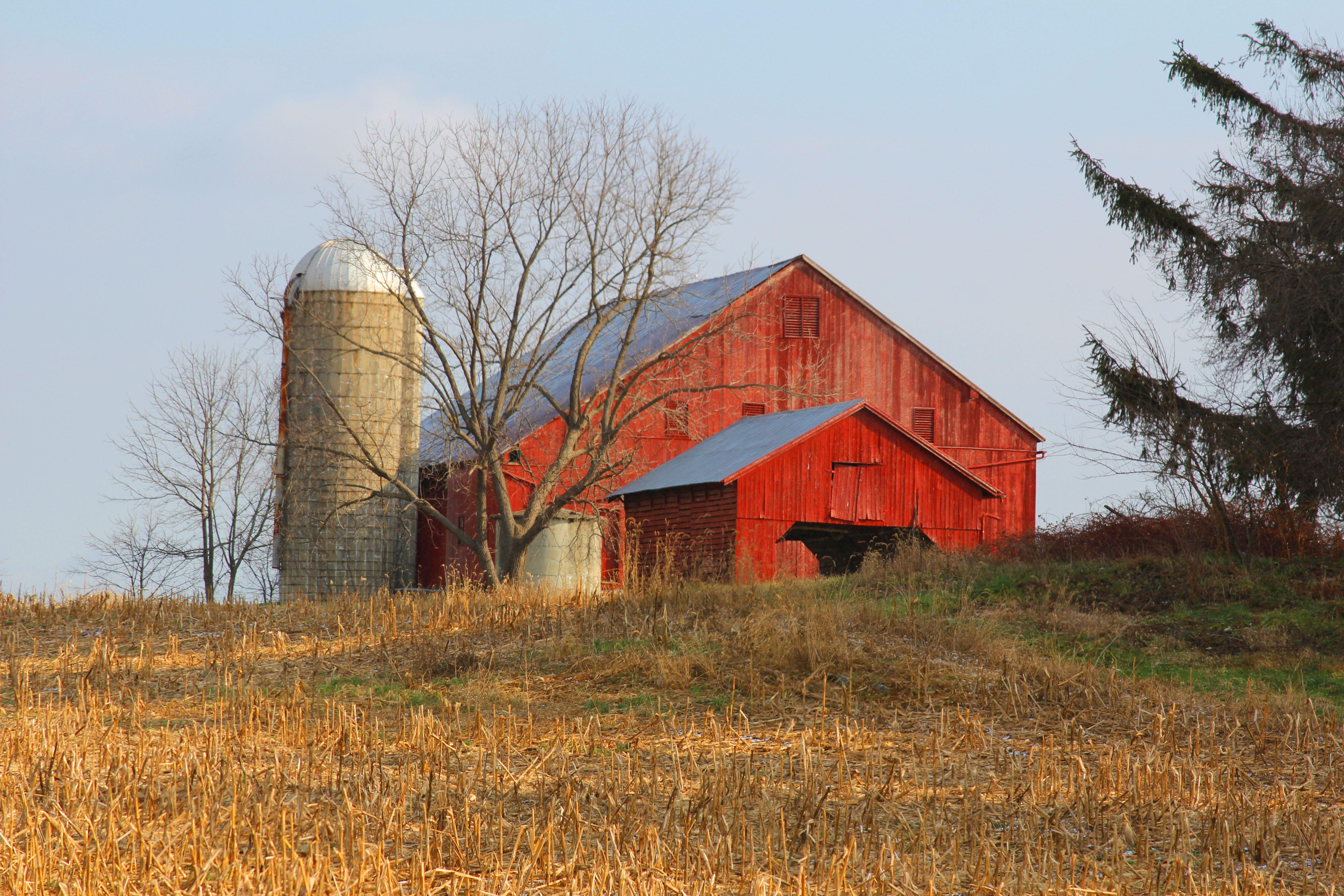 Farm Barn red barn farm related keywords & suggestions - red barn farm long