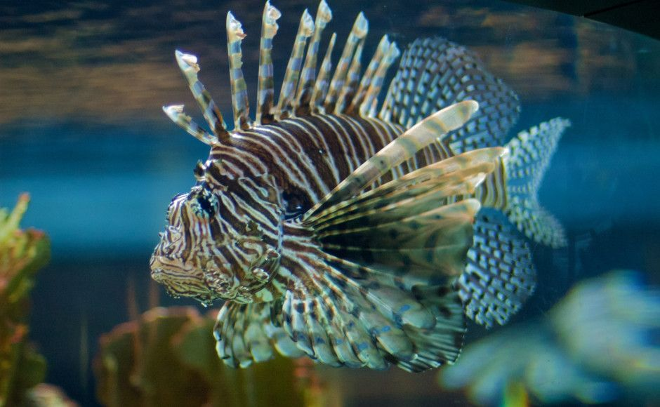 Tropical fish versus freshwater fish, what is the cost