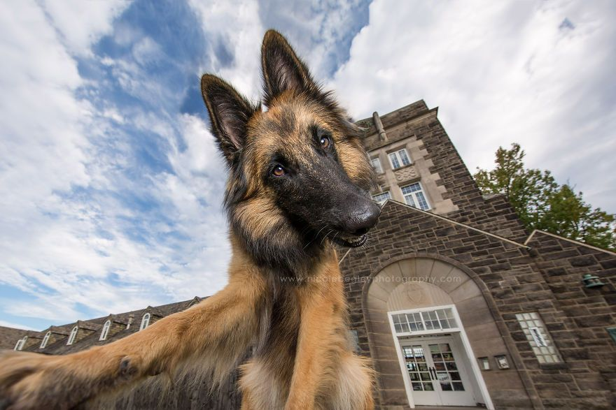 These Dogs Have Mastered The Art Of The Selfie My Photography