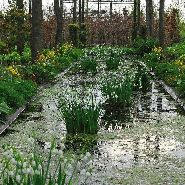Die Sommer Knotenblume Leucojum Aestivum Gravetye Giant Eignet Sich Sehr Gut Fur Die Bepflanzung Von Teichrandern Un Blumenzwiebeln Bepflanzung Staudengarten