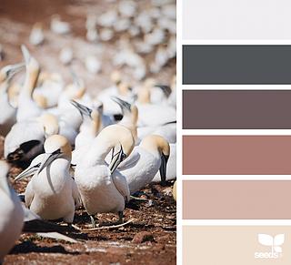 { creature tones } image via: @julie_audet The post Creature Tones appeared first on Design Seeds.