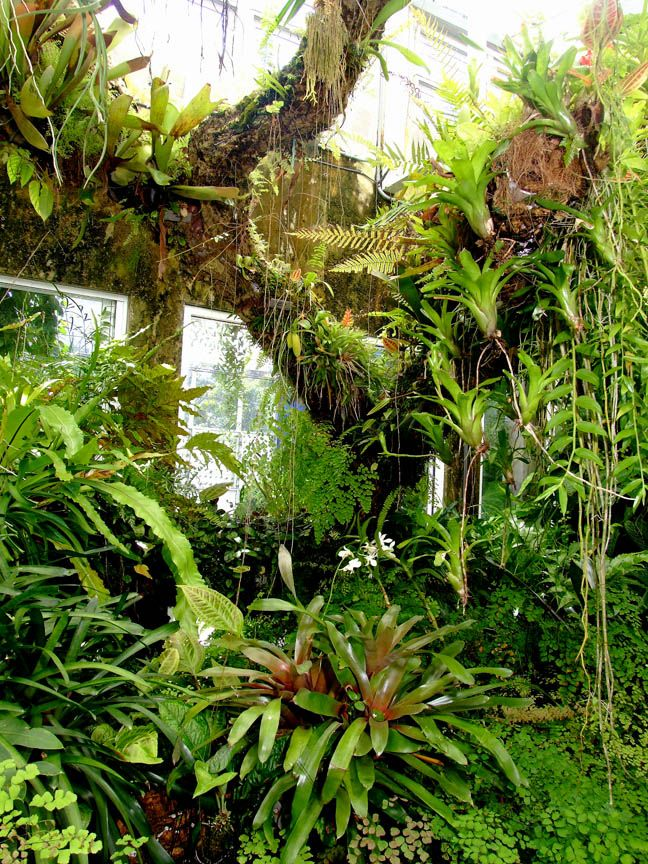 Epiphyte Tree In The Exotic Rainforest Rare Tropical