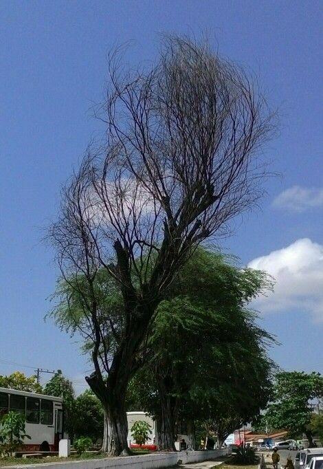 Pindare Mirim em Maranhão