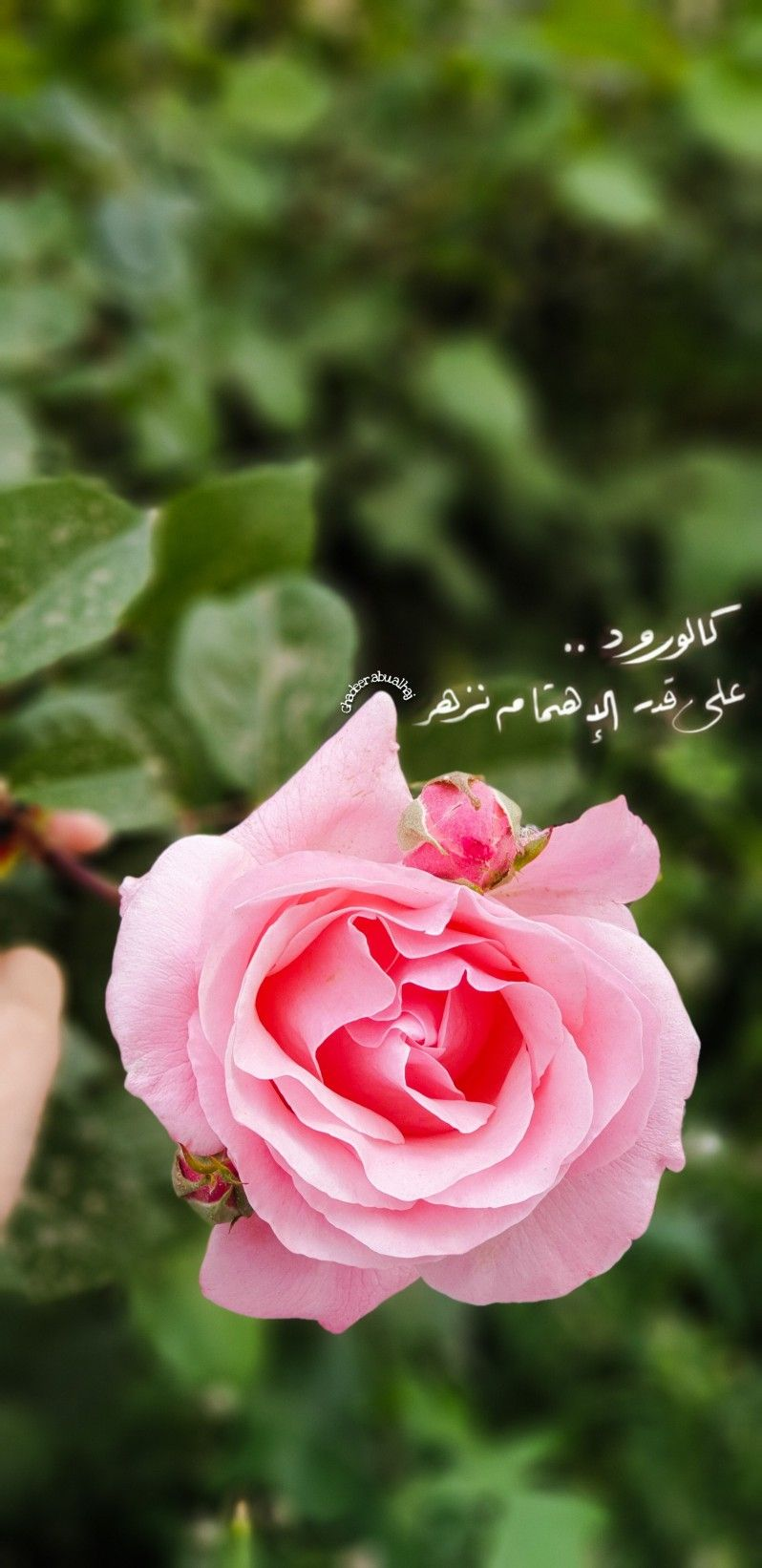 ورد اقتباسات كلام زهري مصورات خلفيات بيسيات Flower Box Gift Sky Photography Nature Anatomy Art