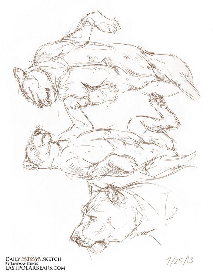 Pin by servio on dibujos copia | Pinterest | Polar bear, Sketches ...