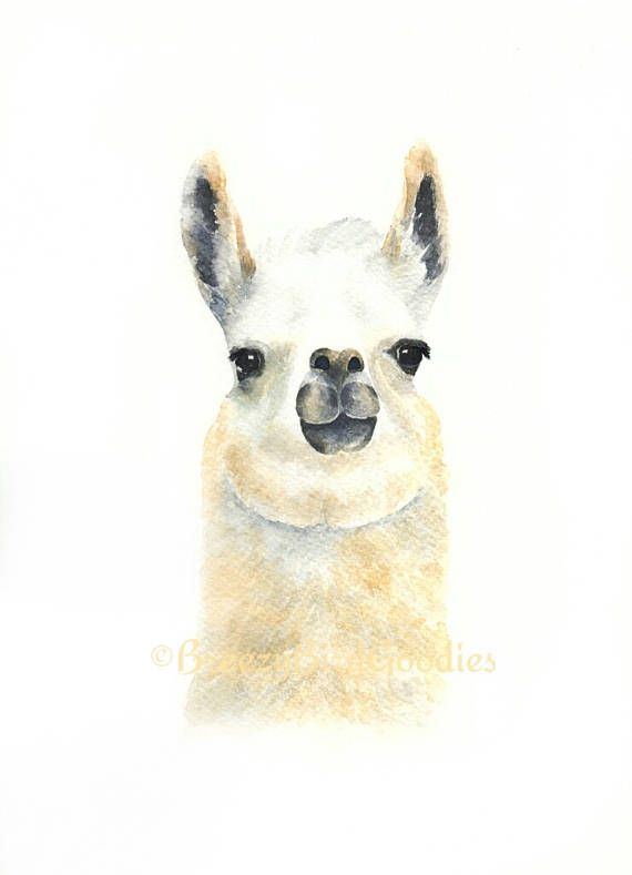 Llama Print Llama Gifts Farm Animal Print Farm Animal