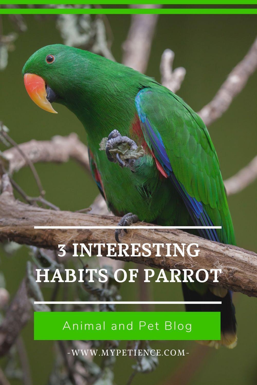 Pin On Parrot Pet Bird