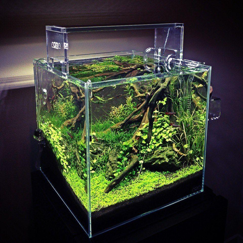 Ada cube garden 30cm 12 x12 x12 aquascape ideas for Aquarium cube