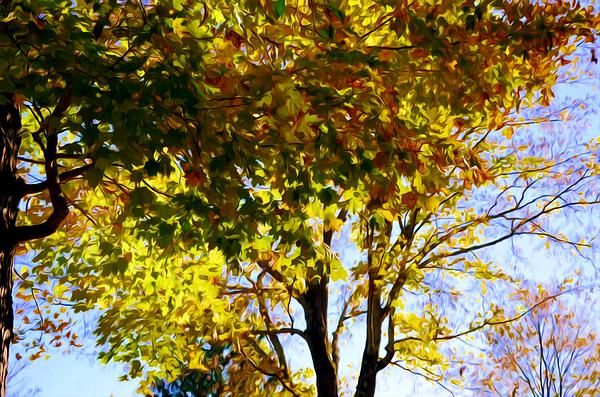 New print available on licensing.pixels.com! - 'Autumn Trees 1' by Lanjee Chee - http://licensing.pixels.com/featured/autumn-trees-1-lanjee-chee.html via @fineartamerica