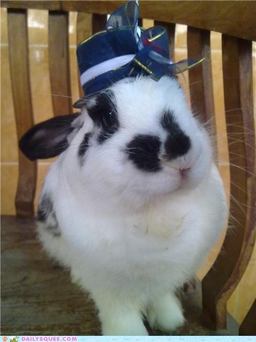 What a dashing rabbit! #rabbit