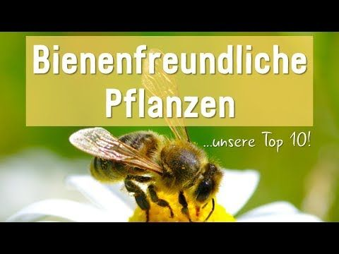 Photo of Top 10 der bienenfreundlichen Pflanzen (Übersicht)