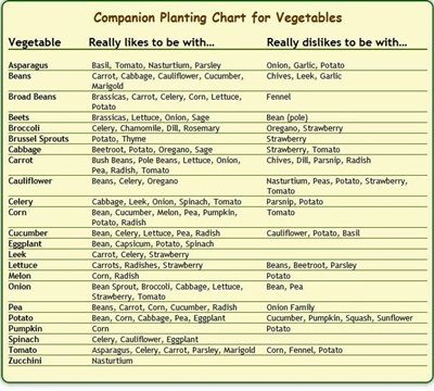 The Homestead Survival  Companion Planting Chart For Vegetables