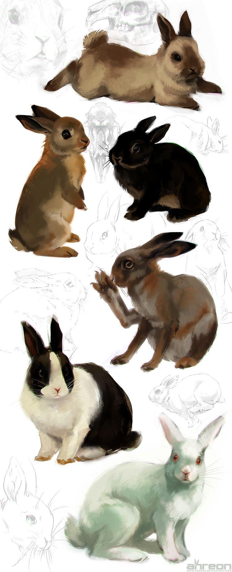 Rabbit Studies #bunny #hare   jordi   Pinterest   Rabbit, deviantART ...