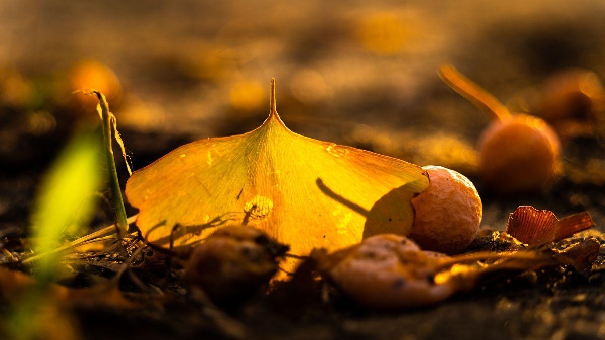 12345今日で9月もおしまい・・・9月って、初旬は真夏なのに、下旬は ...