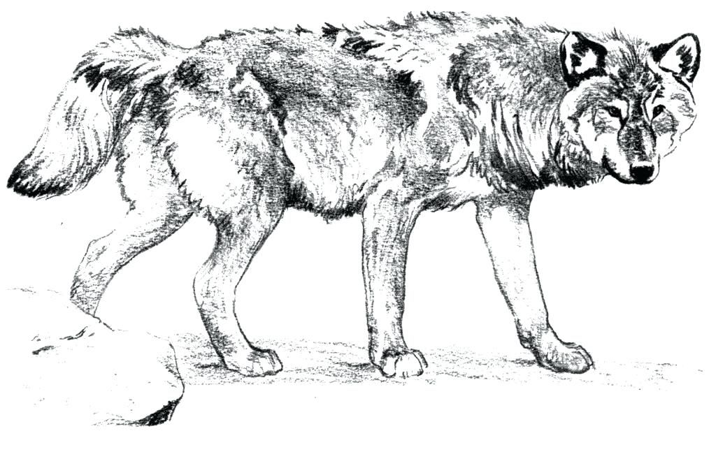 Wolf Coloring Pages For Adults Adult Coloring Pages Horse