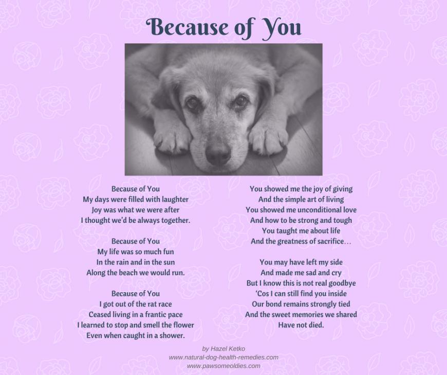 Pet Loss Poems Pet loss, Pet loss grief, Dog poems