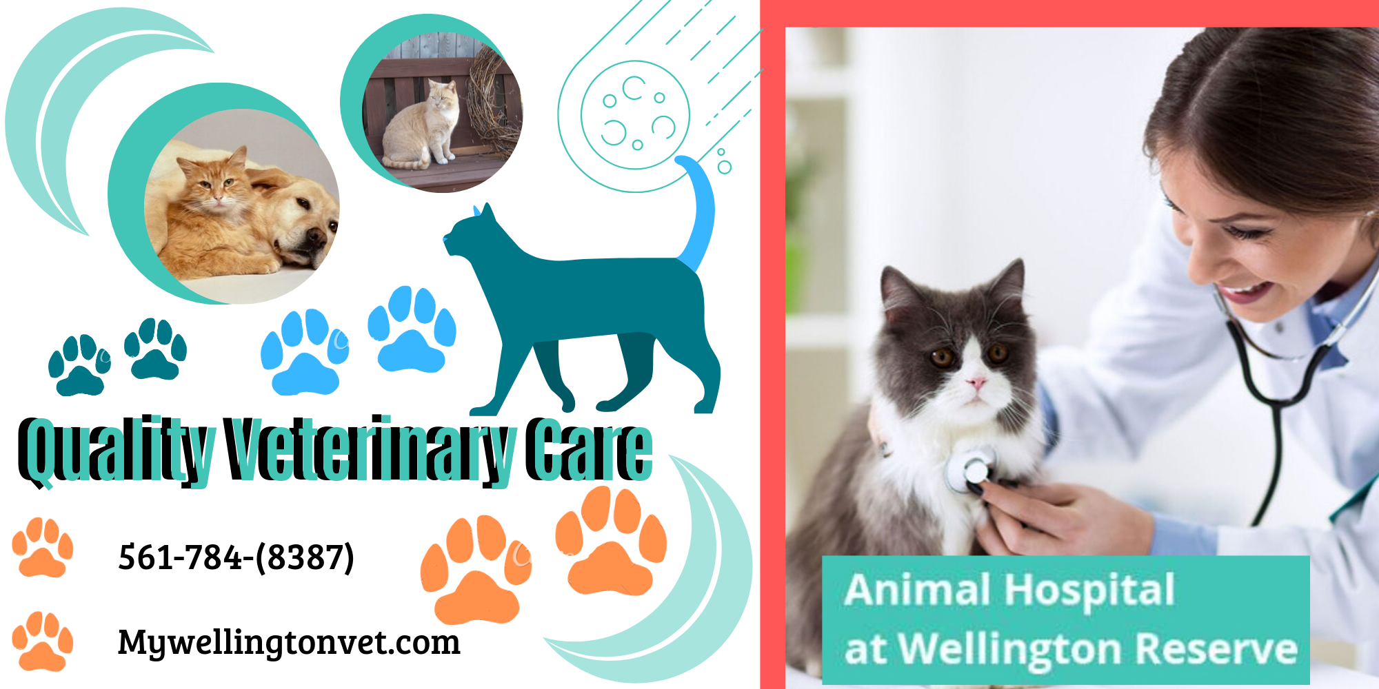 Best Vet for Your Beloved Animals Animal hospital, Pet