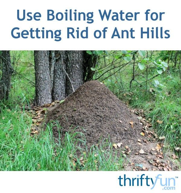 Use Boiling Water For Getting Rid Of Ant Hills Pest Control