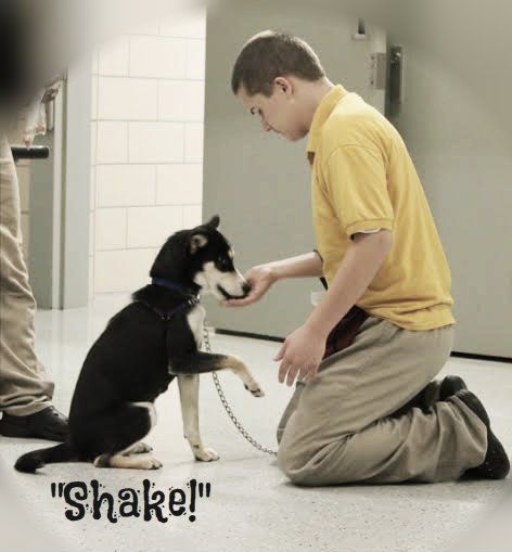 University Of Oakland Animal Assisted Therapy College